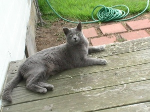 My cat Winkin