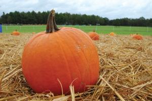 Pumpkin image by Kristin Molinaro