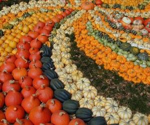 Pumpkin patch image by Harald Bischoff